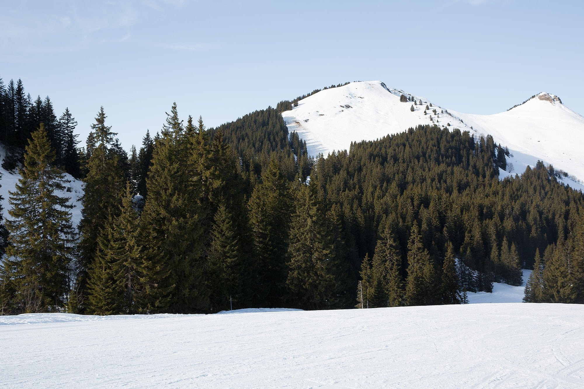 sapins au bord d'une piste de ski