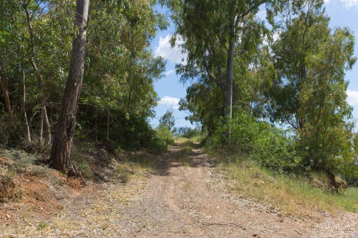 petite route entre des arbres
